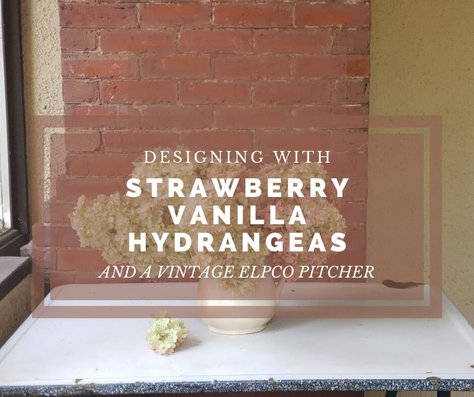 strawberry vanilla hydrangea end of summer color